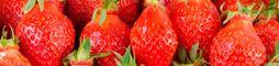 Framboise, myrtille et fruits rouges