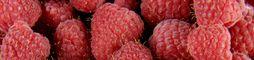 Fruits rouges et melons